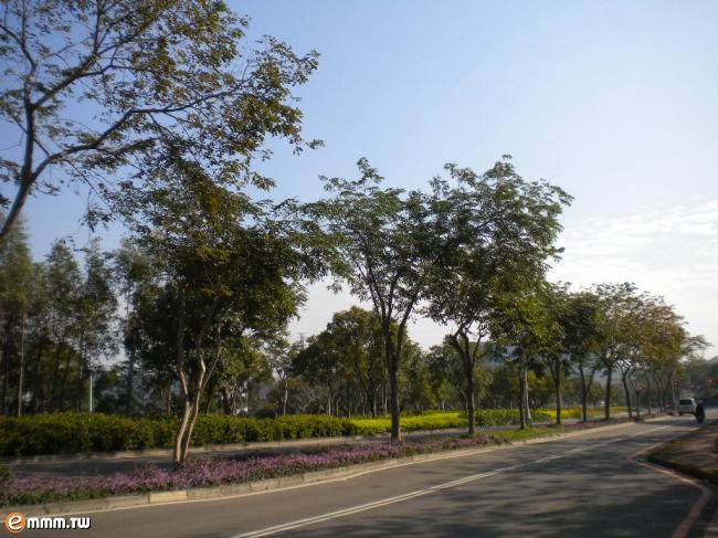 新竹科学园区 人行道绿化做的很好 高清图片