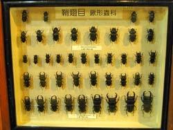 木生昆虫博物馆 - 美美网