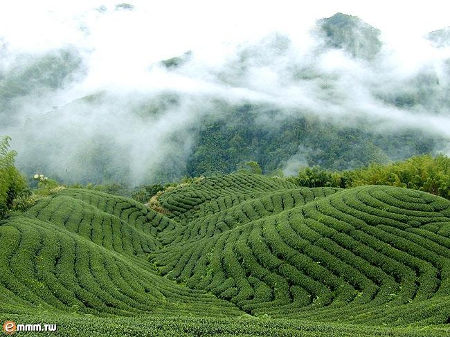 名茶--胡侃 - znx123000 - 心语小院