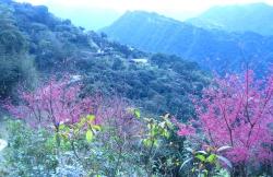 三峽花岩山林花園餐廳