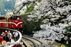 漫步阿里山旅遊網