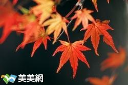 全台賞楓特輯(美美網報導網站)