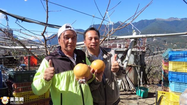 梨山-高山果園幸福旅程-德蘭果園 甜蜜雪梨